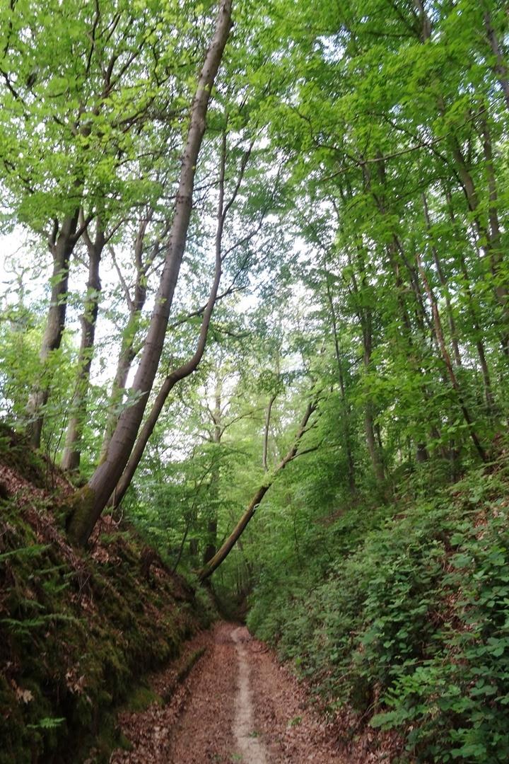basse-wavre-pilgrimage8